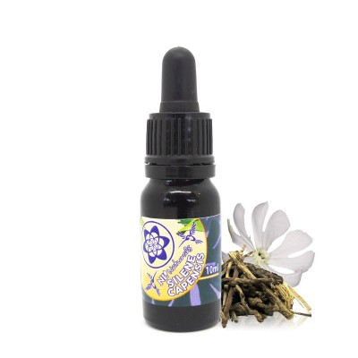 Palo Santo oil - 5ml & 10ml